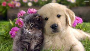 انتقال حیوان خانگی به استرالیا