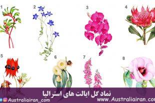 نماد گل ایالت های استرالیا